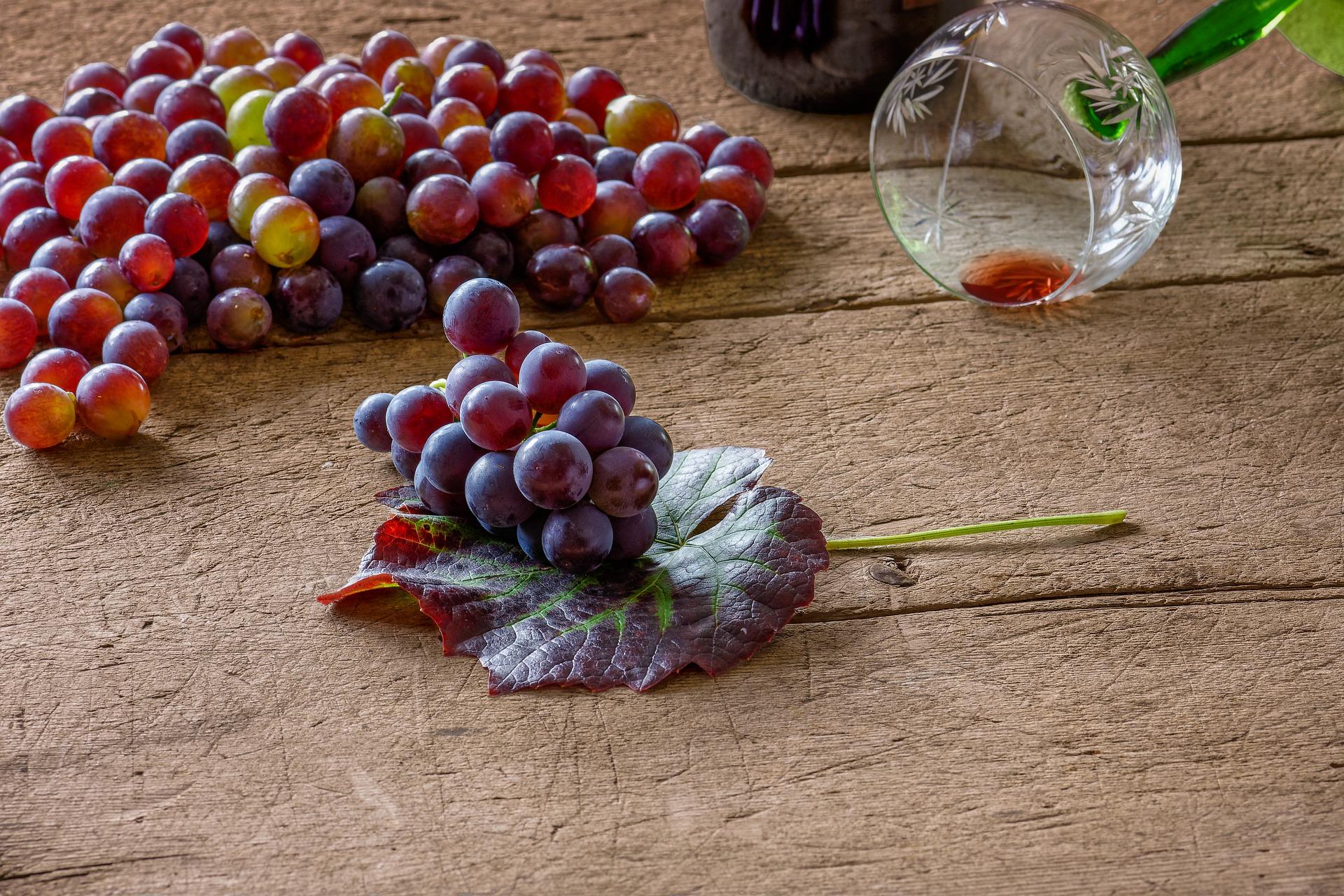 Cabernet Franc - LE16 The Home Vintner